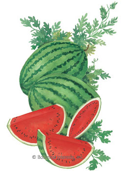 Watermelon Crimson Sweet HEIRLOOM Seeds
