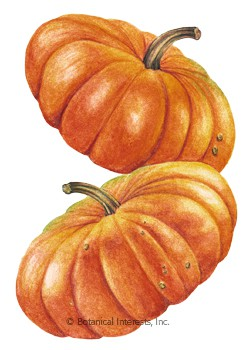 Pumpkin French Cinderella HEIRLOOM Seeds