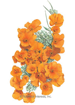 Poppy California Orange Seeds