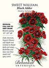 Sweet William Black Adder Seeds