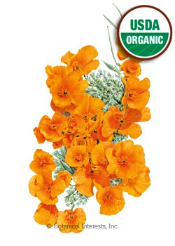 Poppy California Orange Organic Seeds