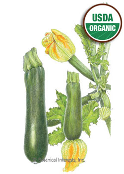 Squash Summer Black Beauty Zucchini Organic HEIRLOOM Seeds