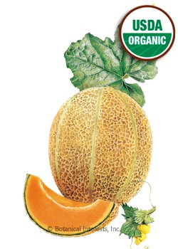 Melon Muskmelon/Cantaloupe Hale's Best Jumbo Organic HEIRLOOM  Seeds