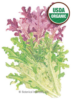 Lettuce Leaf Oak Leaf Blend Organic HEIRLOOM Seeds