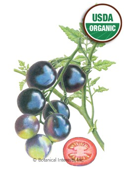 Tomato Cherry Indigo Rose Organic Seeds