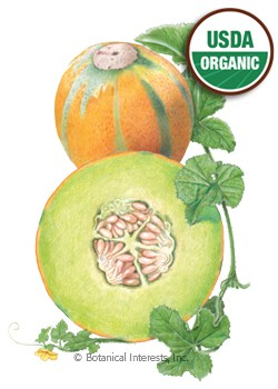 Melon Ha Ogen Organic HEIRLOOM Seeds