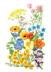 Flower Mix Edible Beauties Seeds