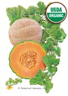 Melon Muskmelon/Cantaloupe Hearts of Gold Organic HEIRLOOM Seeds