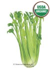Celery Utah Organic HEIRLOOM Seeds