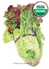 Lettuce Leaf New Red Fire Organic Seeds