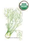 Fennel Florence Perfection Organic Seeds