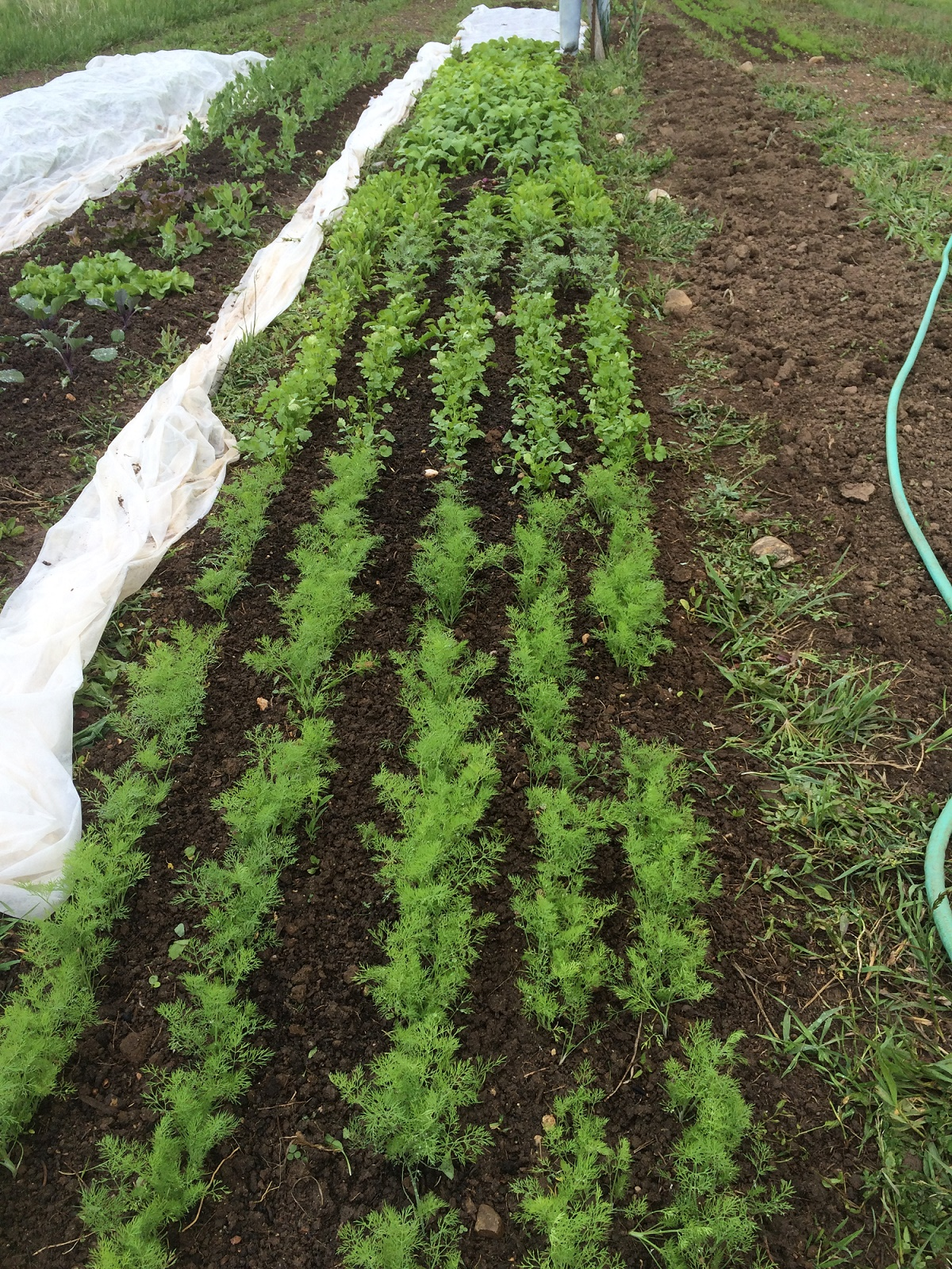 Overwintering Your Vegetable Garden